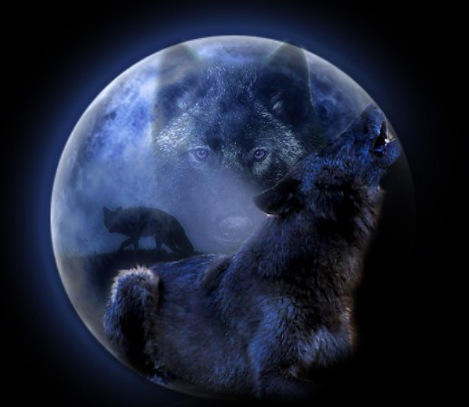 wolf wallpaper. Wallpaper Black Wolf